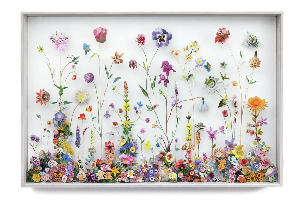 Image of Floral Collages by Anne ten Donkelaar